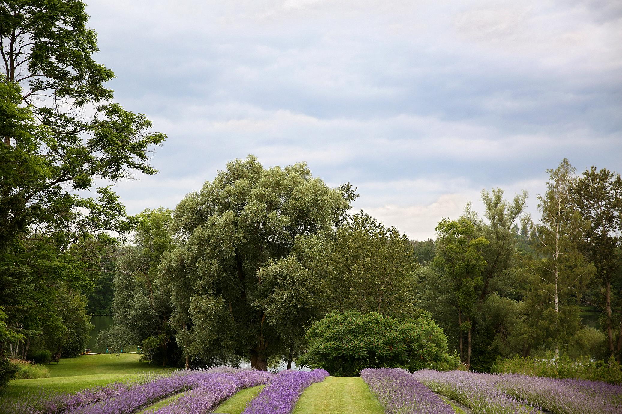 Lavender_Farm_Engagement_0001